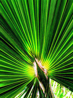 Photograph - Fan Of Green by Frances Ann Hattier