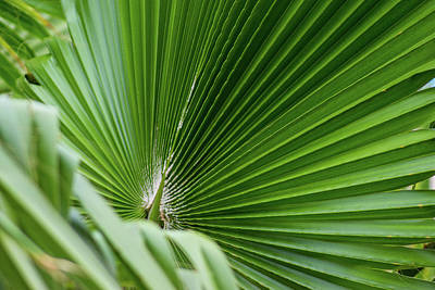 Photograph - Fan Palm View 4 by James Gay
