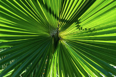 Photograph - Fan Palm View by James Gay