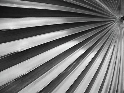 Photograph - Fan Pleats by Florene Welebny