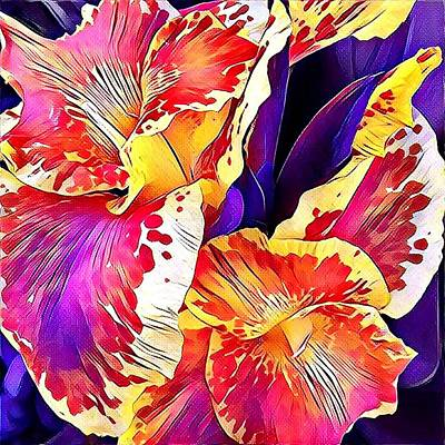 Photograph - Fanciful Canna  by Heidi Smith