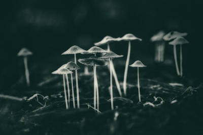 Stem Photograph - Fanciful Fungus by Tom Mc Nemar