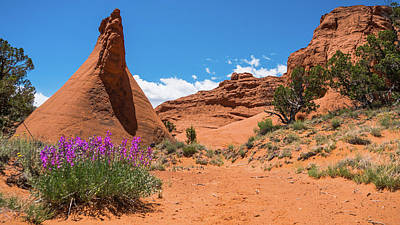 Photograph - Fanciful Wildflowers Kodachrome State Park Utah by Lawrence S Richardson Jr