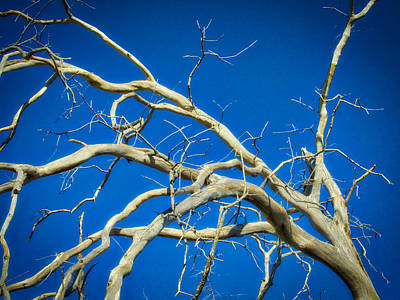 Photograph - Fancy Branches by VB Medley