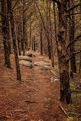 Photograph - Fancy Creek Trail by Scott Bean