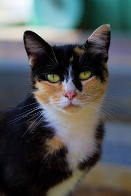 Photograph - Fancy Face Kitty by Kathy Clark