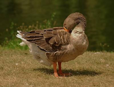 Photograph - Fancy Goose by Ramona Whiteaker
