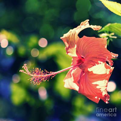 Photograph - Fancy Hibiscus by Karen Lewis