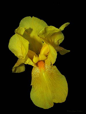 Photograph - Fancy Yellow Iris Two by Joyce Dickens