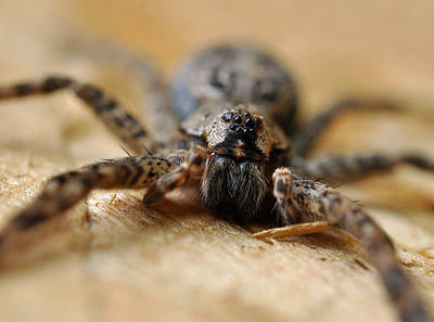 Photograph - Spider Close Up by Glenn Gordon