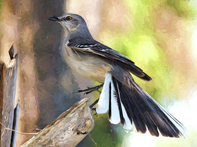 Mockingbird Digital Art - Fanned Out by Jill Nightingale