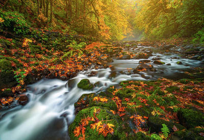 Of Fall Photograph - Fantasies Of Fall by Darren White
