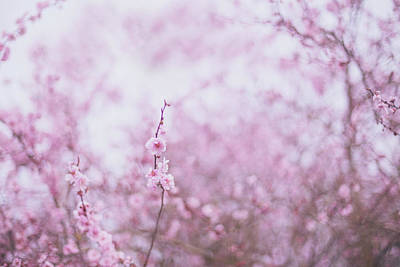 Photograph - Fantasies Of Spring by Kunal Mehra
