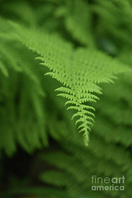 Photograph - Fantastic Look At A Green Fern Frond In A Shade Garden by DejaVu Designs