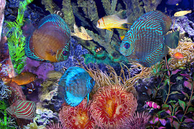 Photograph - Fantasy Acquarium II by Michele A Loftus