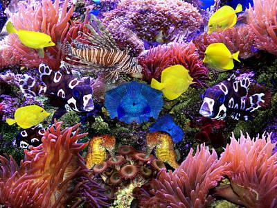 Photograph - Fantasy Aquarium by Michele Loftus