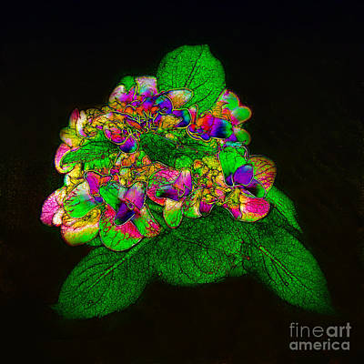 Photograph - Fantasy Bouquet by Judi Bagwell