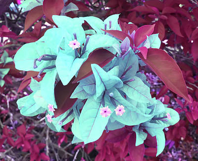 Photograph - Fantasy Flowers by Aimee L Maher Photography and Art Visit ALMGallerydotcom