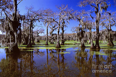 Photograph - Fantasy Forest - Caddo Lake Cypress Trees by Jon Holiday