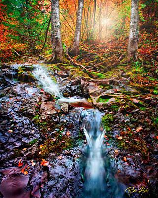 Photograph - Fantasy Forest by Rikk Flohr
