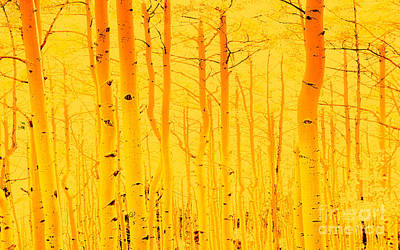Photograph - Fantasy Forest by Tim Richards