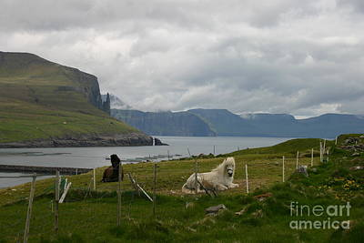Photograph - Faroe Islands Horses by Susanne Baumann