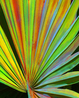 Photograph - Fantasy Palm Leaf Abstract 2 by Margaret Saheed