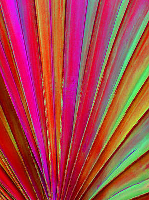 Photograph - Fantasy Palm Leaf Abstract by Margaret Saheed