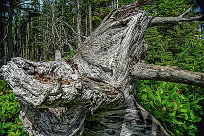Photograph - Fantasy Stump by Bill Posner