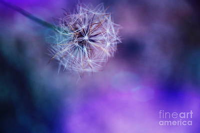 Photograph - Fantasy Wishes -macro Dandelion by Adrian DeLeon