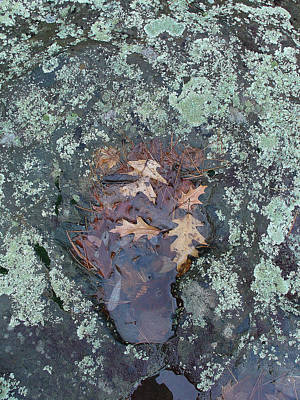 Photograph - Fantom In The Weathered Bluestone by Terrance De Pietro