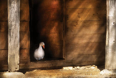 Miksavad Photograph - Farm - Duck - Welcome To My Home  by Mike Savad