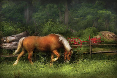 Horsey Photograph - Farm - Horse - In The Meadow by Mike Savad