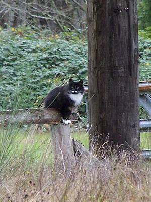 Photograph - Farm Cat by Gene Ritchhart