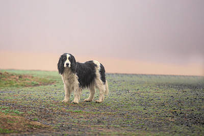 Photograph - Farm Dog In Fog by Jack Nevitt