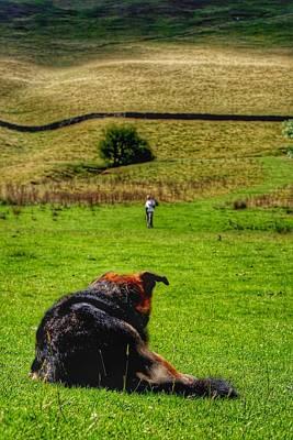 Photograph - Farm Dog by Abbie Shores