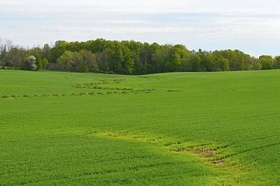 Photograph - Farm Field In May  by Lyle Crump
