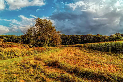 Photograph - Farm Field by Lilia D