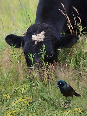 Photograph - Farm Friends by Robin-Lee Vieira