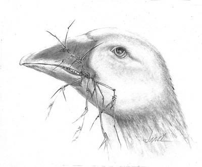 Drawing - Farm Goose by Jacki Kellum