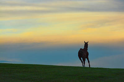 Photograph - Farm Horse At Sunset by Tana Reiff