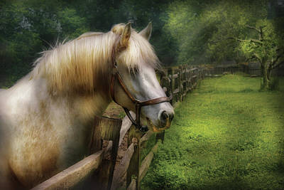 Horsey Photograph - Farm - Horse - White Stallion by Mike Savad