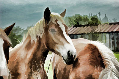 Photograph - Belgian Draft Horses by Wilma Birdwell