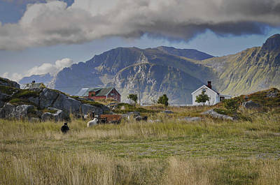 Photograph - Farm Houses And Sheep On Lofoten by Intensivelight