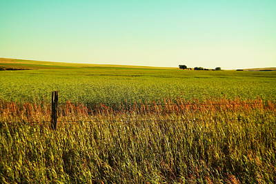 Birds Rights Managed Images - Farm landscape Royalty-Free Image by Jeff Swan