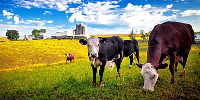Photograph - Farm Life 2 by Emmanuel Panagiotakis