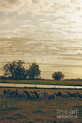 Photograph - Farm Portrait by Cassandra Buckley