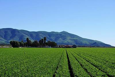 Photograph - Farm Rows - Mountain View by Matt Harang