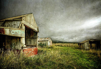 Photograph - Farm Sheds And Pigeons by Wayne Sherriff