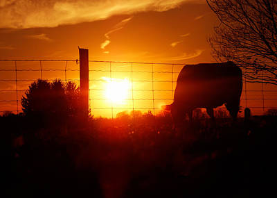 Photograph - Farm Silhouette by Garvin Hunter